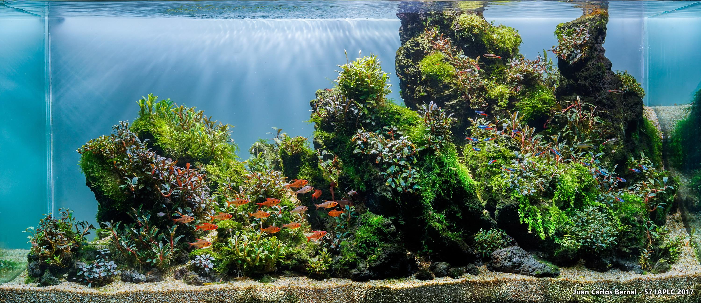 Green Reef – Juan Carlos Bernal